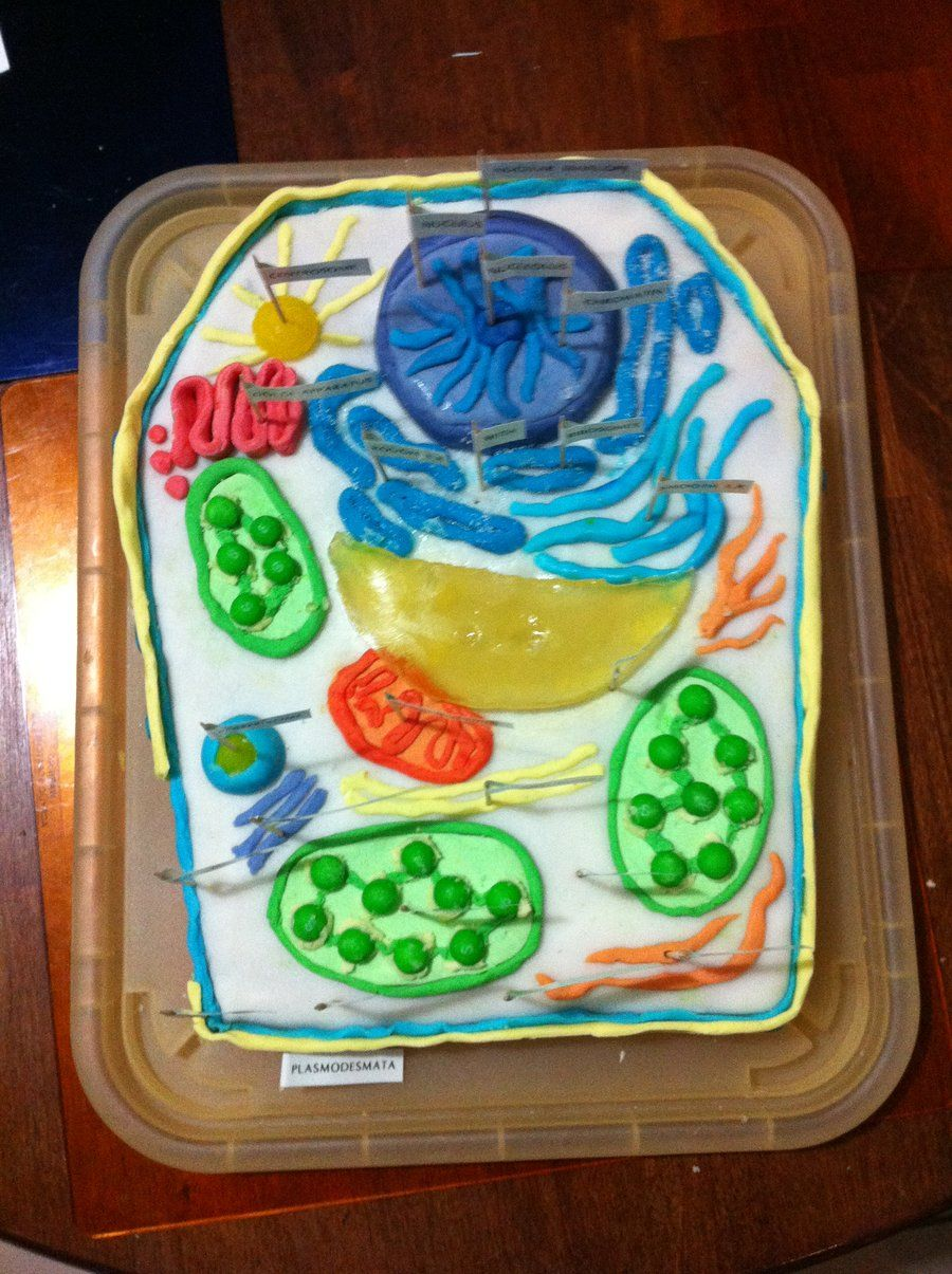 edible cell project instructions