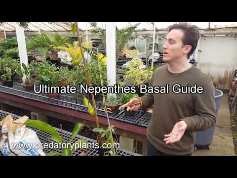 pitcher plant care instructions