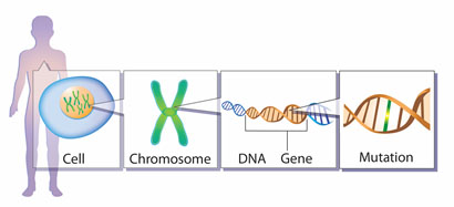 what do genes contain instructions for
